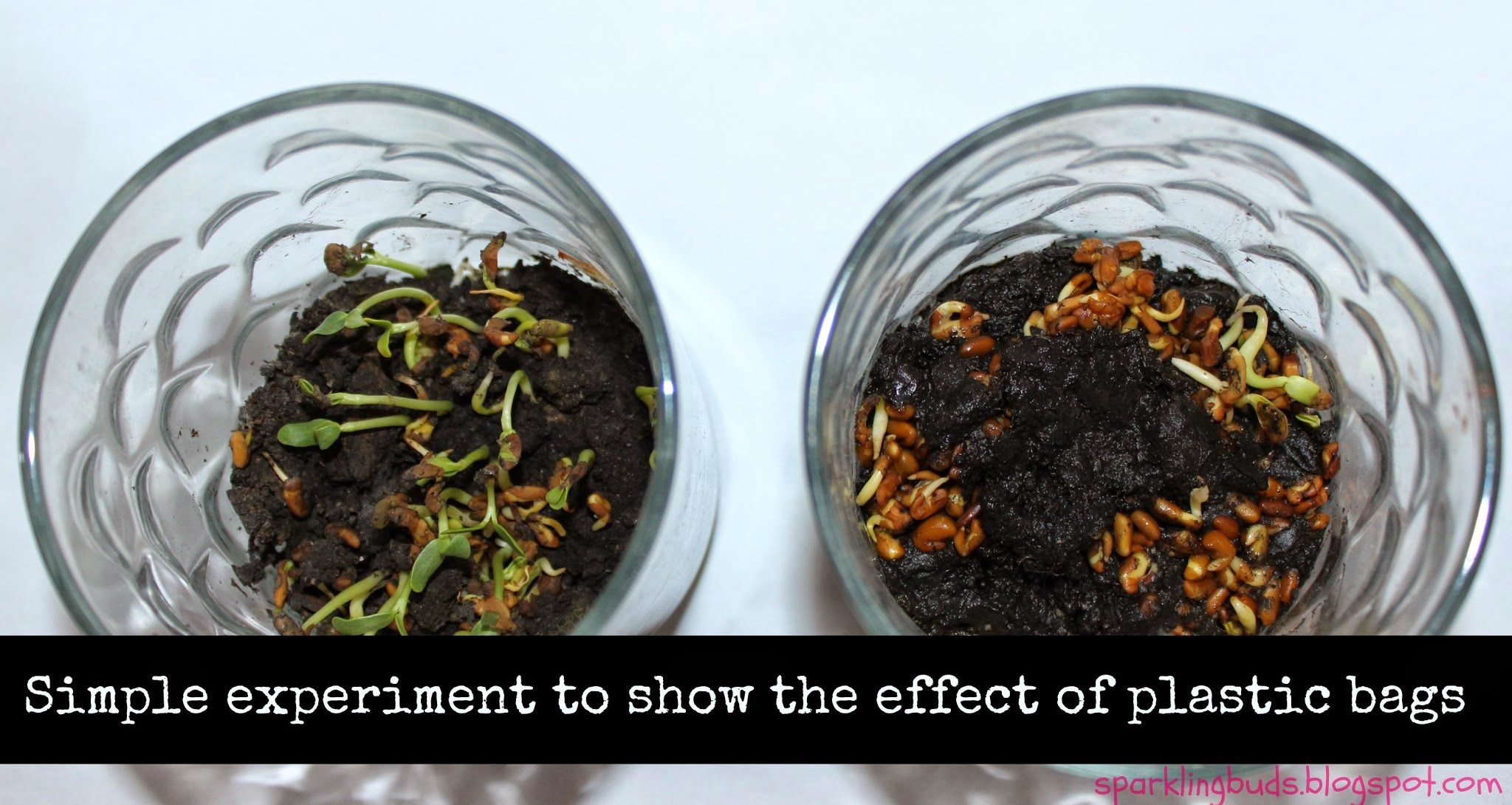 Simple Science Experiment To Show The Effect Of Plastic